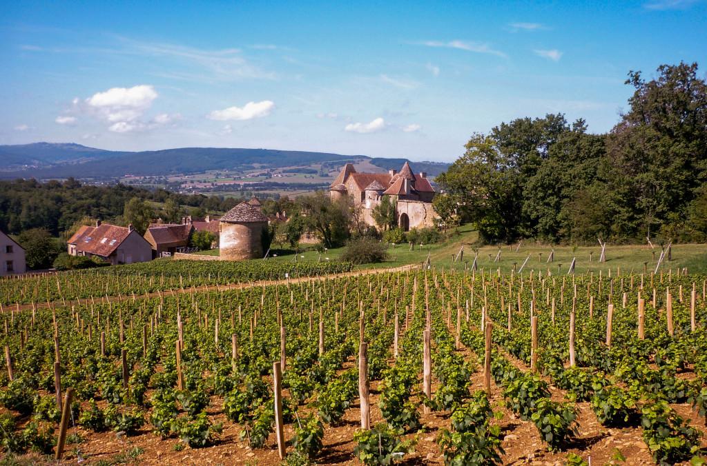 Vignes-pontus-tyard
